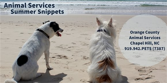 Summer Snippets Banner