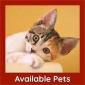 Available Pets