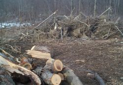 brush_stump_pile_size_250