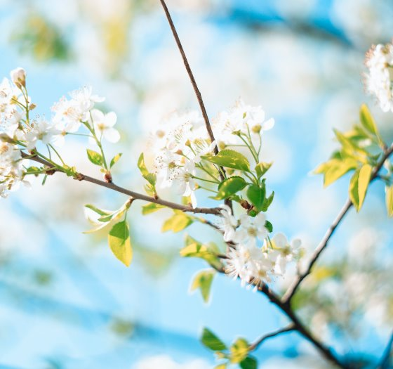 Spring blossom. Photo by Markus Spiske temporausch.com from Pexels