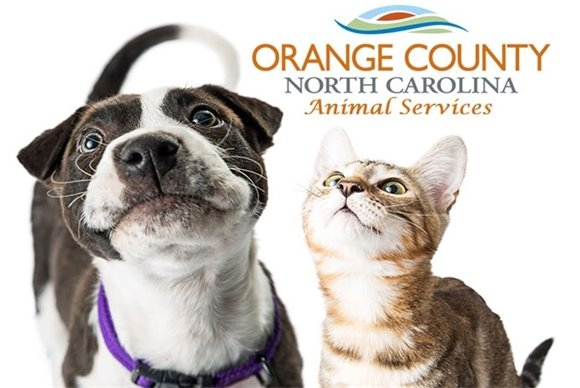 Everything August 2019 at Orange County Animal Services