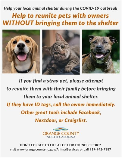 Help Strays During COVID-19