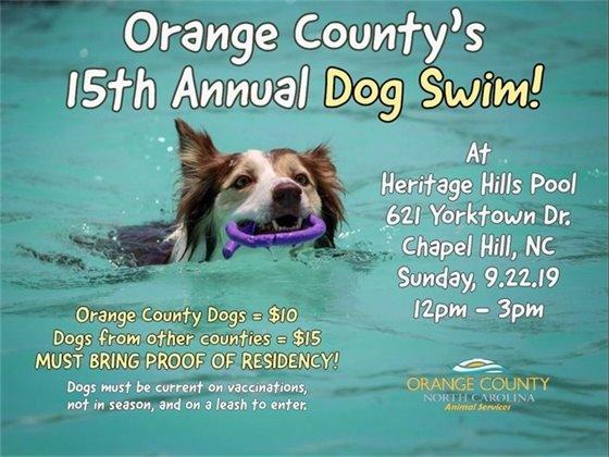 Graphic of dog swim