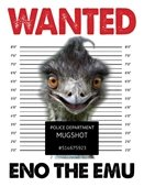 Emu wanted graphic