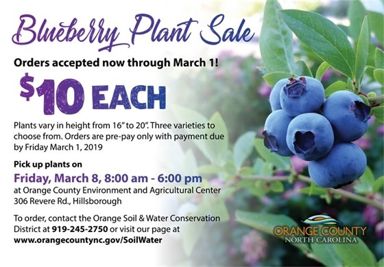 Blueberry sale graphic