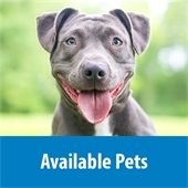 Available pets at Orange County Animal Center