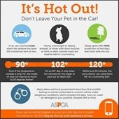 Hot pets graphic