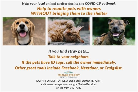 Stray pets graphic