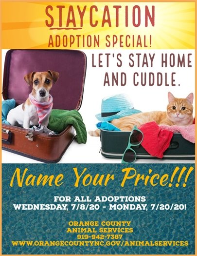 Orange County Animal Services Staycation Adoption Special