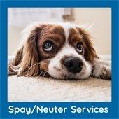 Spay/Neuter Services