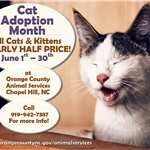 Cat Adoption Month