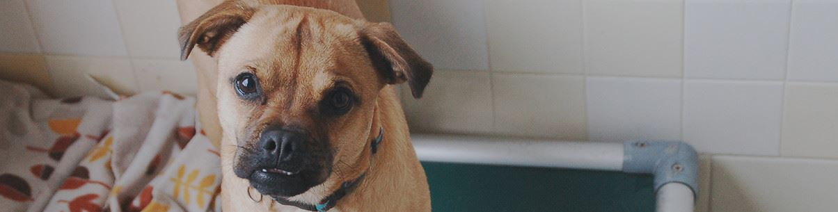 Available Pets | Orange County, NC