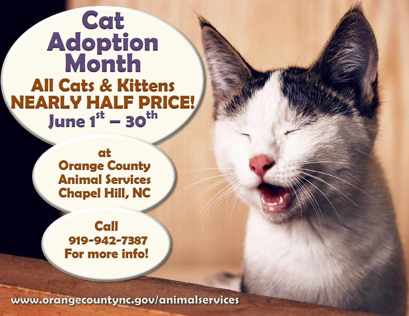 June Is Cat Adoption Month Opens in new window