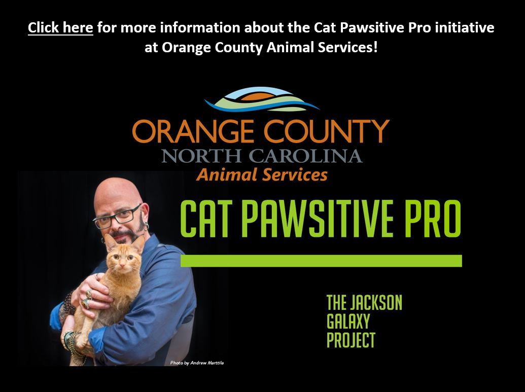 Cat Pawsitive Pro  Opens in new window